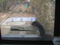 Squirrelfeeder